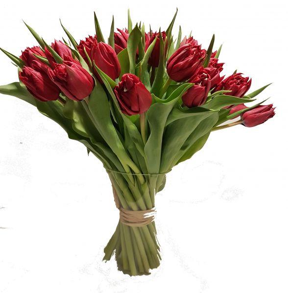 Tulpenstrauß rot mit roten Tulpen ein wahrer Hingucker im Frühling