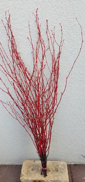 Trockenblumen - Birke - Rot