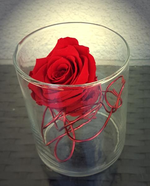 Haltbare Rose