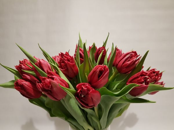 """Frühlingsstrauß """"Red Spring"""" - Tulpenstrauß rot - Blumenstrauß mit Tulpen in Rot"""