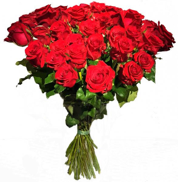♡ 30 rote Rosen ♡