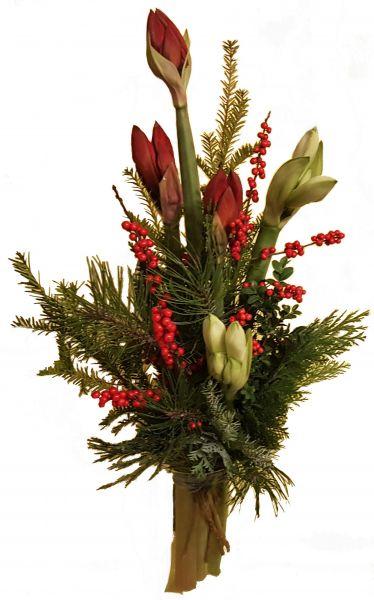 adventlicher Blumenstrauß rote Amaryllis weiße Amaryllis frische Tanne zu Weihnachten