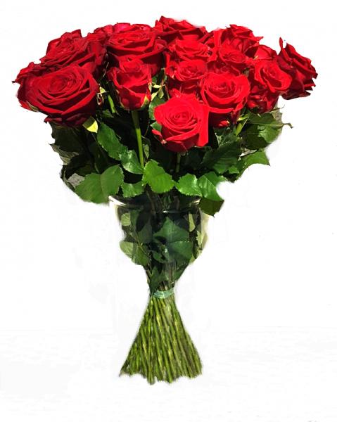 ♡ 15 rote Rosen ♡ 50cm lang