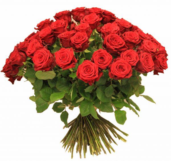 Rote Rosen Super Qualität, Sorte Red Naomi vom Züchter Porta Nova
