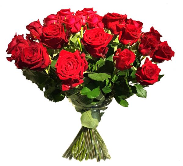 ♡ 20 rote Rosen ♡