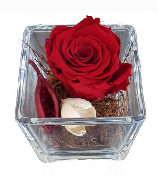 Rosen Infinity als Geschenk