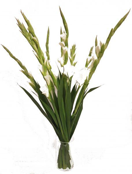 Weiße Gladiolen bestellen bei www.flora-trans.de