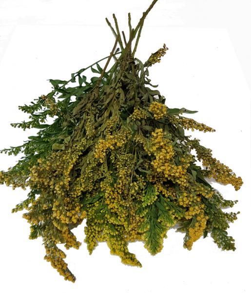 Trockenblumen 10x Solidago