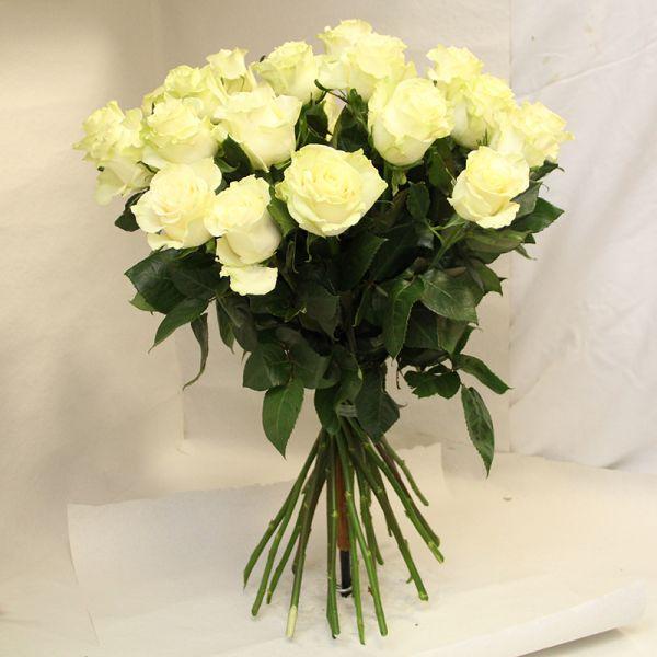 Weiße Rosen, Super Qualität, Sorte Montreal , Große Köpfe