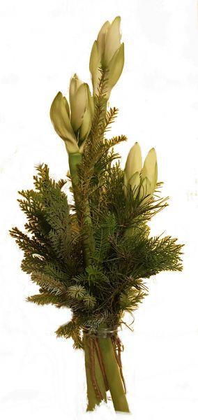 winterlicher Blumenstrauß weiße Amaryllis frisches Grün zum Advent zu Weihnachten