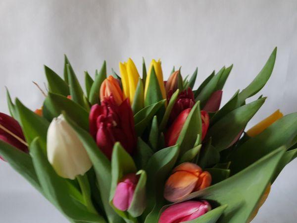 bunte Tulpen