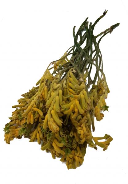 Trockenblumen 10x Anigozanthos