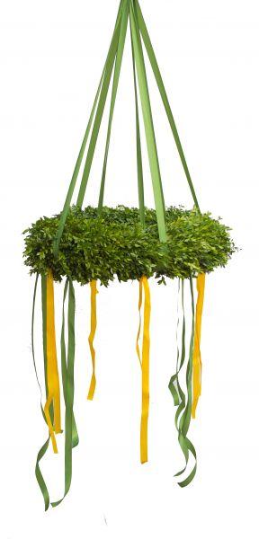 Richtkranz aus Buchsbaum frisch gebunden mit Band in grün-Weiß-Gelb