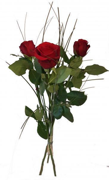 Rote Rose Sorte Red Devel