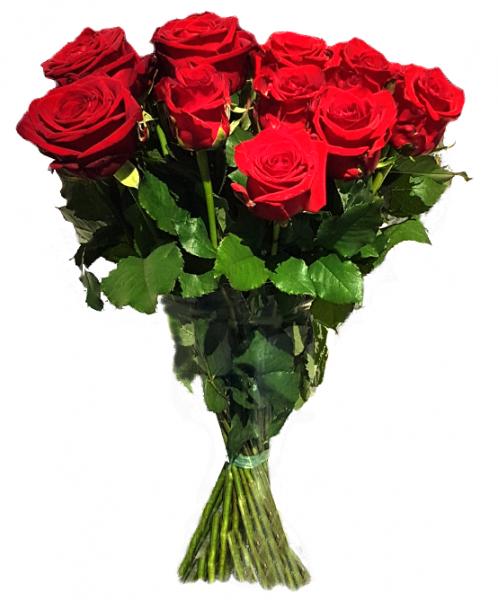 ♡ 10 rote Rosen ♡