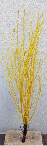 Trockenblumen - Birke - Gelb