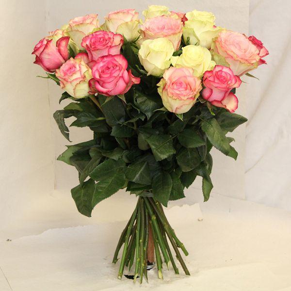 Weiße, Pink und Rosa Rosen mit großem Kopf und sehr guter Qualität, Sorten:  Clown, Montreal, Esperance